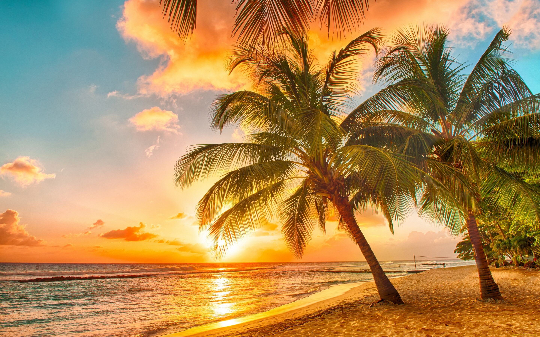 Картинки тропики отдых